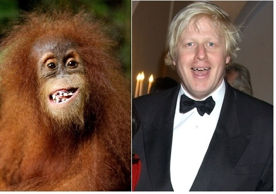 Boris gives us a grin, an orangutan follows suit.