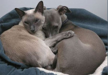 greyhound / dog / dogs / upper hutt / cats / pets