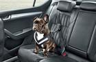 dog seatbelt / skoda