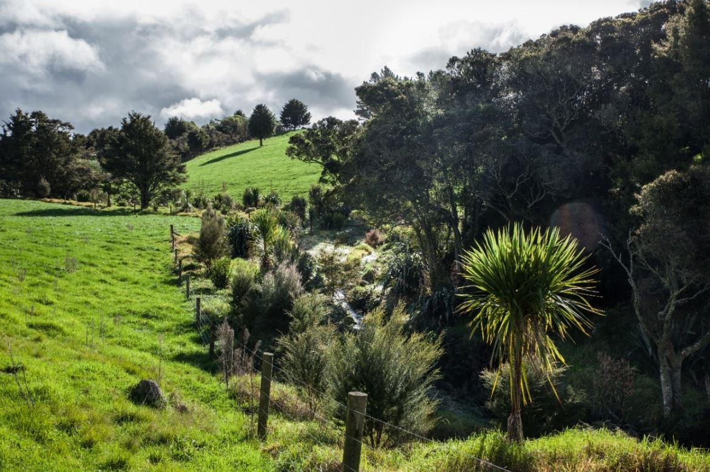 Te Atatu house